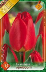 Apeldoorn_Tulipa_541a900565e89