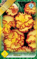 Begonia_crispa_m_54abd1e9efdf9