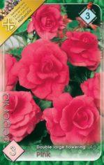 Begonia_double_l_54abd0e67b7ab