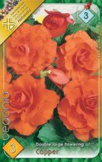 Begonia_double_l_54b902222d6dd