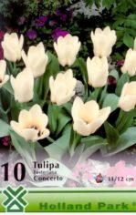 Concerto___Tulip_4aab735fbf0be