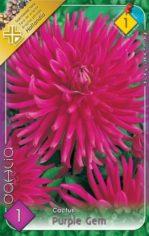 Dahlia_Cactus_Pu_5487fb4004272