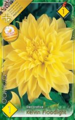 Dahlia_Decorativ_5487f57dc2541
