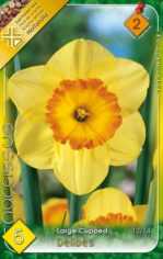 Delibes___Narcis_541ab4d36936b