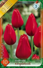 Kingsblood_Tulip_541a9087d1cd6