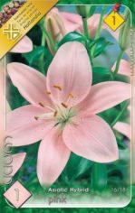 Lilium_Asiatic_P_54abd45b64bc6