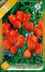 Orange_Bouquet_T_541a99213bbf9