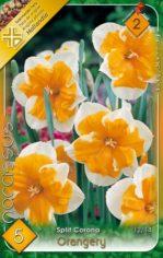 Orangery___Narci_541ab6d4722c9