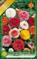 Ranunculus_asiat_54212498a4541
