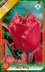 Red_Wing_Tulipa__541a99dda60c4