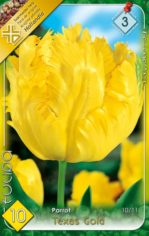 Texas_Gold_Tulip_541a9afc87baa