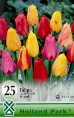 Tulip__n_Darwin__4aaba8612c12d