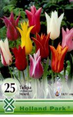 Tulip__n_liliomv_4aaba8ac06b85