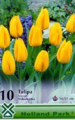 Yokohama___Tulip_4aab585ec8916