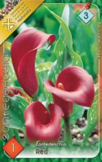 Zantedeschia_red_54b900f62946f