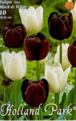 Tulipa_Duo_Black_4e4d54cb62284