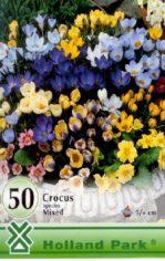 Crocus_Botanical_4e64ec4453ad1
