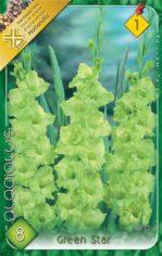 Gladiolus_Green__54882fde011d1