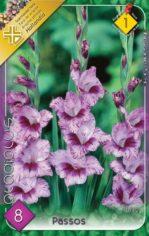 Gladiolus_Passos_54abcdc4a6d87