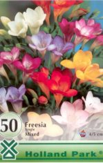 Freesia_Single_M_5123766db80f4