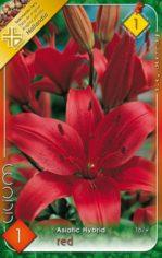 Lilium_Asiatic_R_53fc4ce4c9c4e