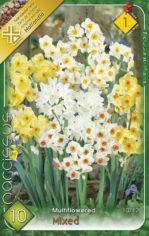 Narcissus_multif_55d25316f0ff3