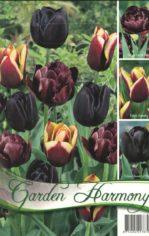 Tulip__n_kollekc_55e9360f80799