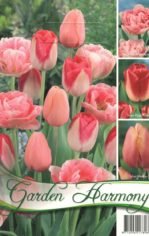 Tulip__n_kollekc_55e93669b0640