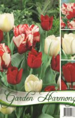 Tulip__n_kollekc_55e936b9a11d8