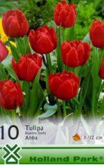 Abba….___Tulip_4aab484570ad8