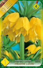 Fritillaria_impe_5421285c5dba7