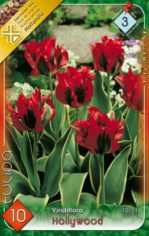 Hollywood_Tulipa_541a9a05f3723