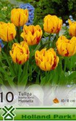 Monsella___Tulip_4aab4a9958ff3