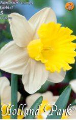 Narcissus_Goblet_4e577640ee490